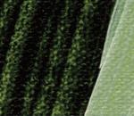 Sap green 560